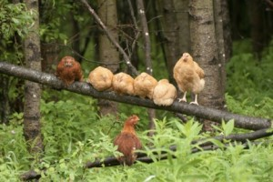 chicks hang out-1